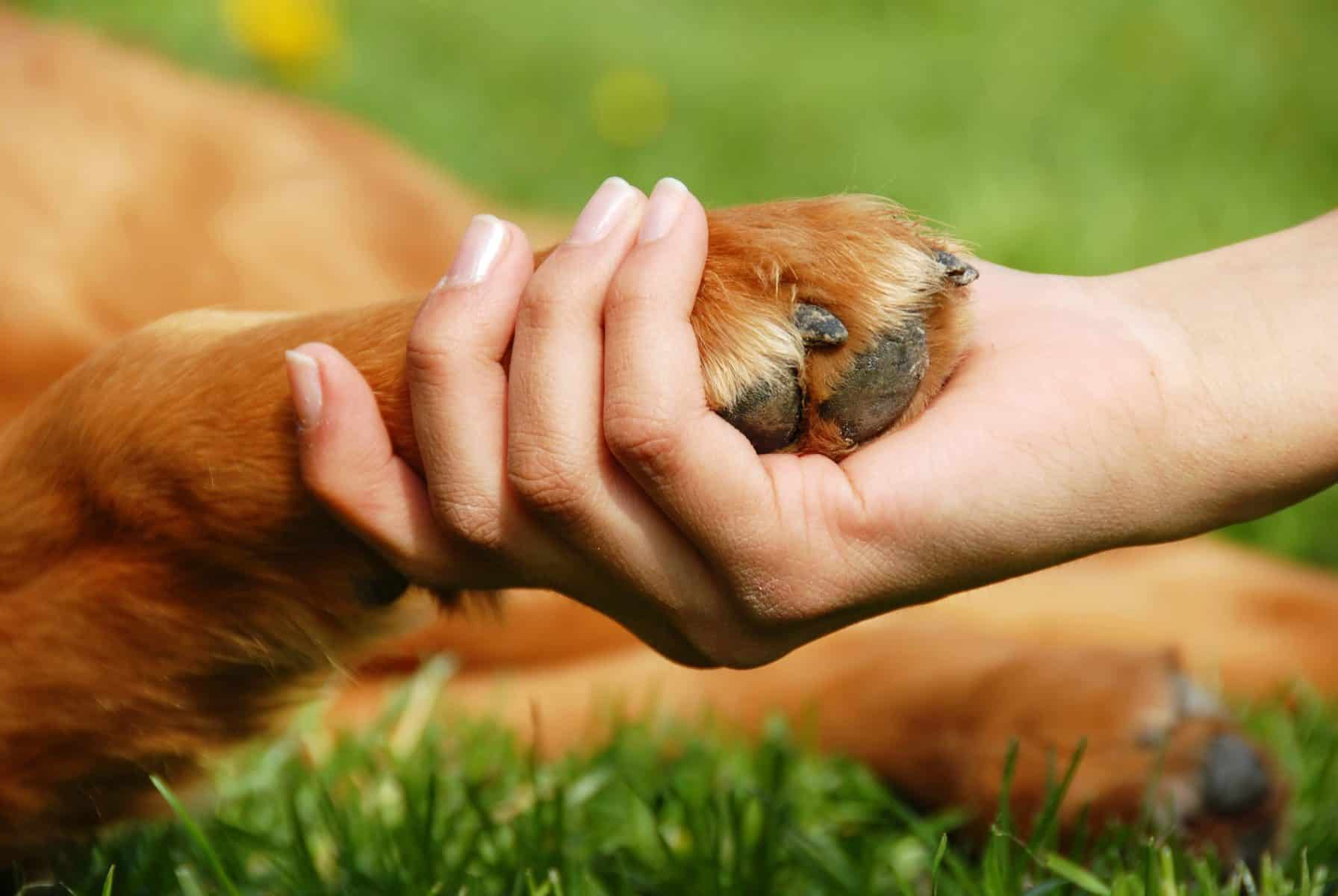 """How to Plan a """"Pet Trust"""" to Protect Your Pet After Your Death"""